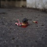 The Street Art Created With Tiny People – 13 Pics!