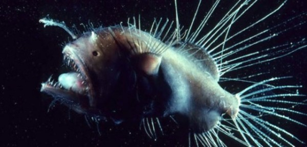 9 different types of creepiest fish in the world bloggedd for Angler fish size