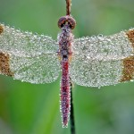 Amazing Macro Photos of Dew on Insects!