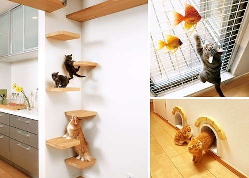 Cat Dream Home 2