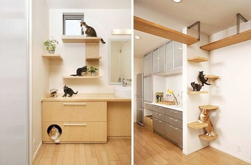 Cat Dream Home 3