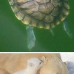 The Cutest Animal Moms and Their Babies!